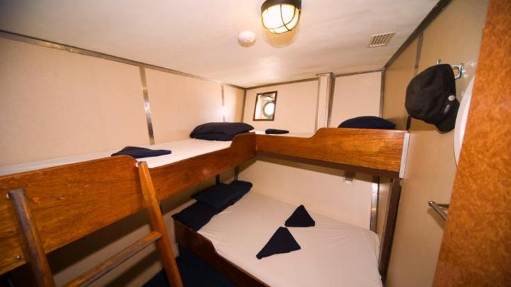 Comfortable cabin accommodation on our dive and snorkel boat - Whitsundays Great Barrier Reef