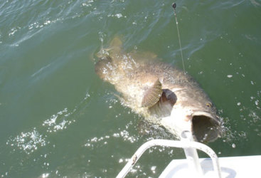 Cairns Fishing Tours | Catch a famous Barramundi