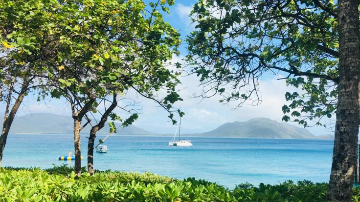 Fitzroy Island Tours - Whale Watching Tours