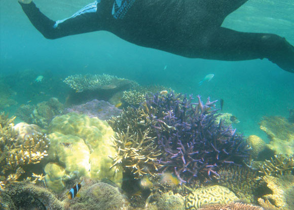 Discover the magical underwater world snorkelling off Fitzroy Island
