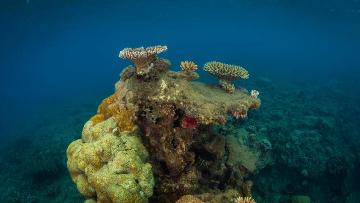 Healthy coral on the Great Barrier Reef in Cairns, Australia