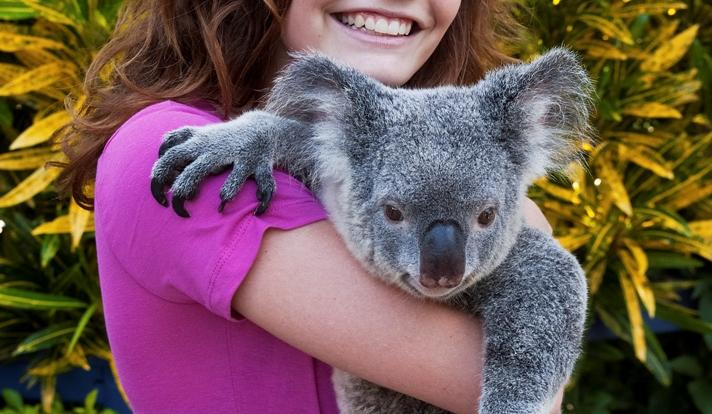 Get your photo with a koala at Hartleys