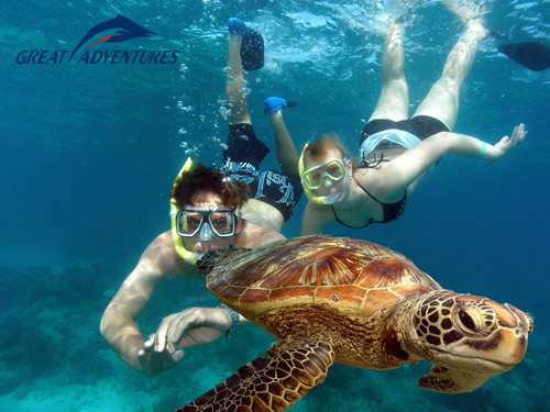 Swim with turtles at Green Island