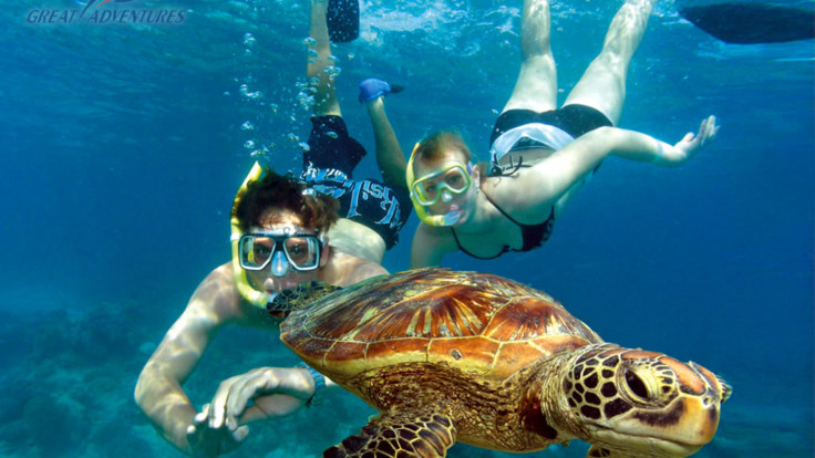 Swimming with turtles, Green Island. Great Barrier Reef