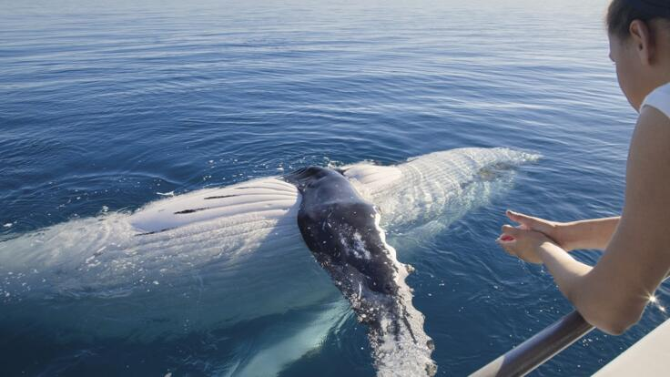 Half Day Whale Watching Tours Hervey Bay
