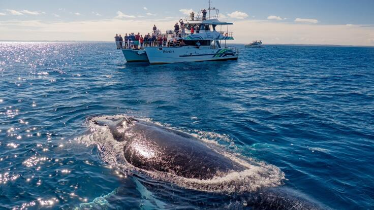 Hervey Bay - Whale Watch - Swim With Whales
