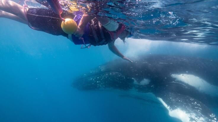 Swim with Humpback Whales in Hervey Bay
