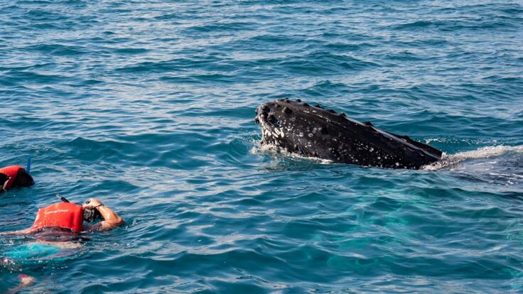 Swim with Whales in Hervey Bay