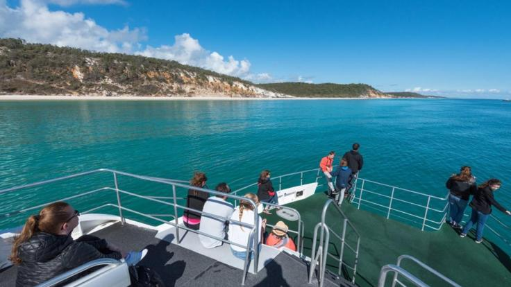 Hervey Bay Whale Watching Half Day Tour - get up close to these majestic creatures