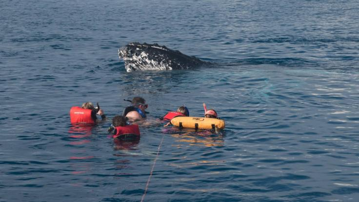 Swim with Humpback Whales Hervey Bay