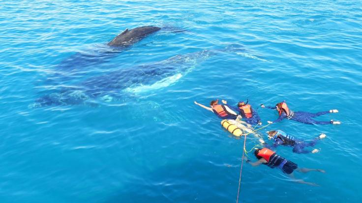 Swim with the Whales Hervey Bay - an amazing opportunity!