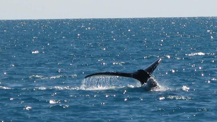 Spot whales during Whale season around the Whitsunday Islands