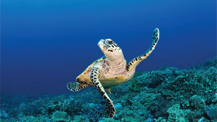 Luxury Yacht Charter Port Douglas - Dive - Snorkel - Turtles