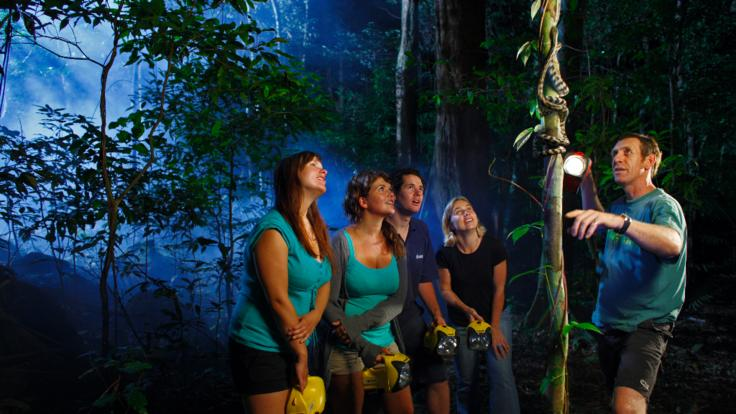 Guided walk at night in the Daintree rainforest
