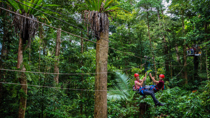 Zip line on a jungle surfing tour in the Daintree Rainforest in Queensland