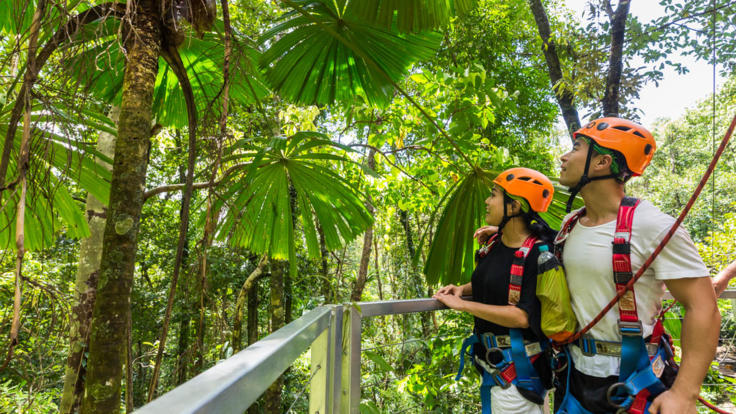 Fan Palms in the Daintree Rainforest on your zip line tour