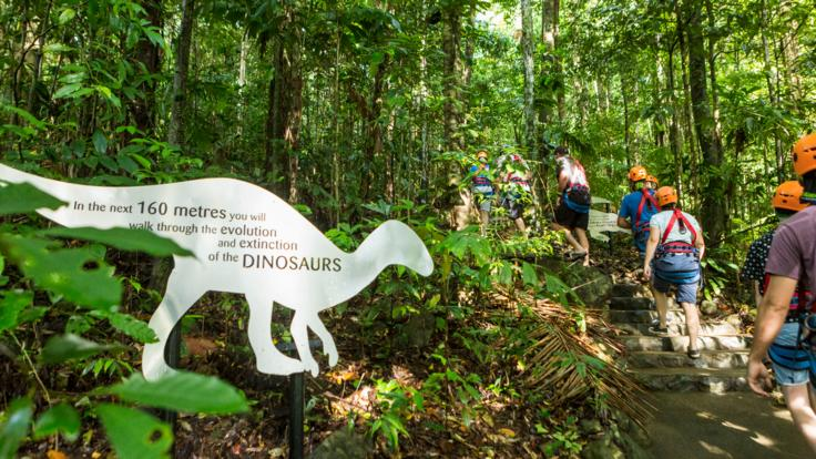 Learn about the Daintree Rainforest on zip line tour
