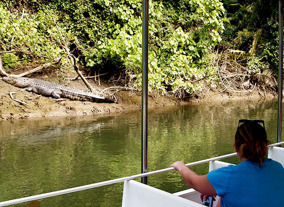 Spot a crocodile on the Daintree River Cruise