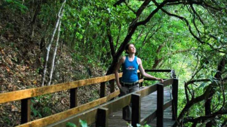 Guided boardwalks through Cape Tribulation and Daintree