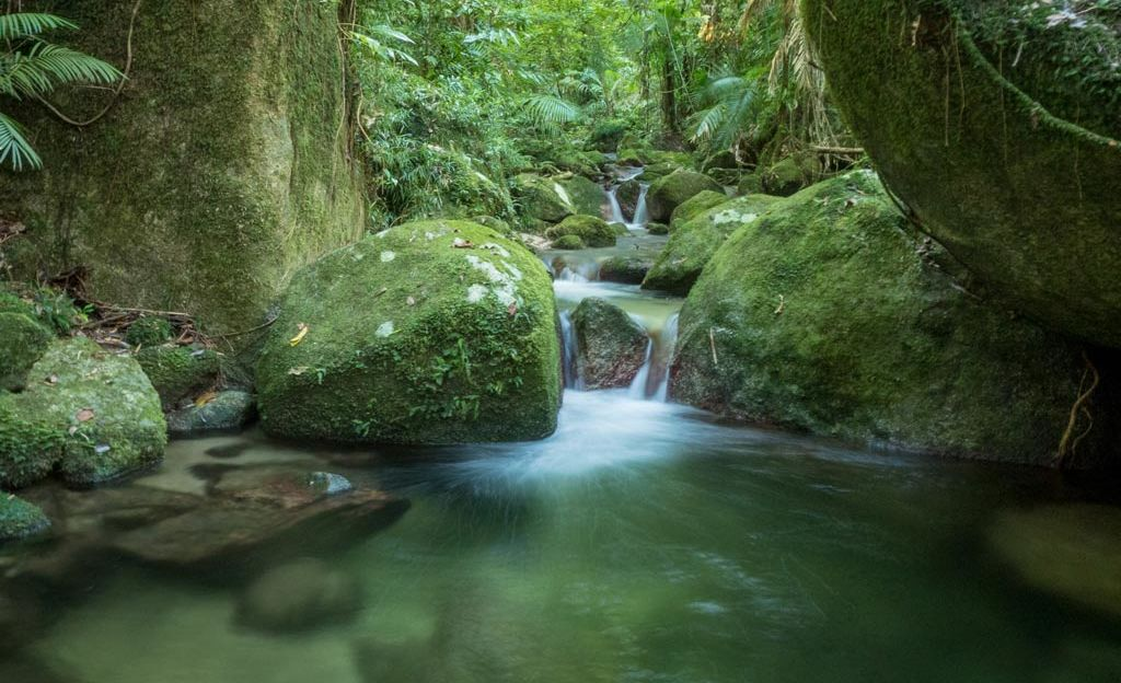 Rainforest waters, Daintree Tropical North Queensland, Australia