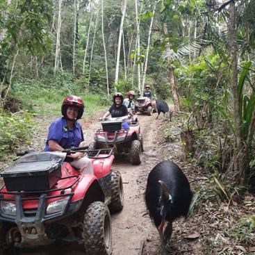 ATV Rainforest Tours Cairns | Cassowary