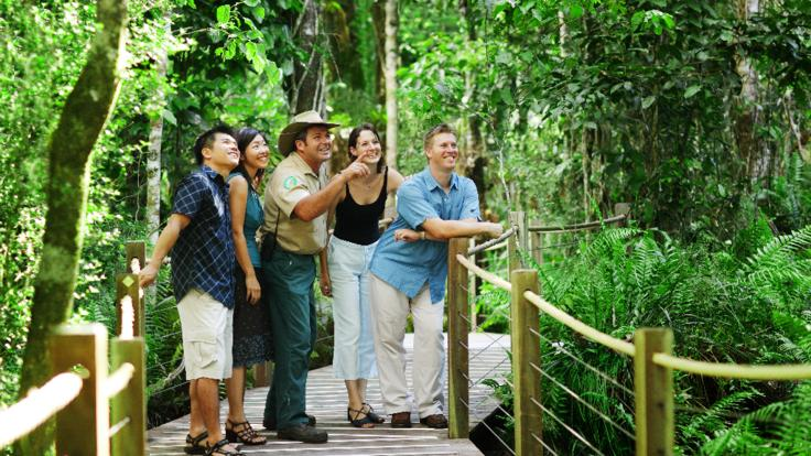 Guided tours at the rainforest board walks