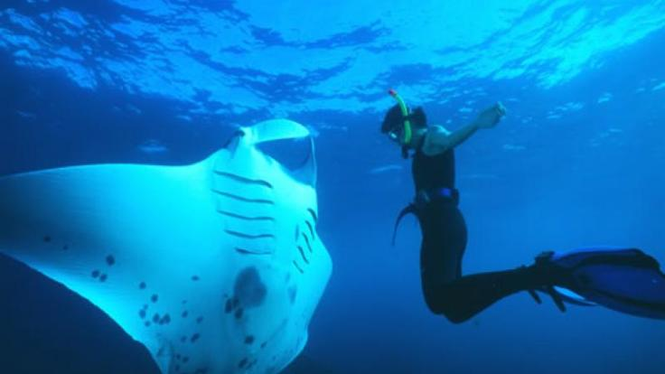Mantaray & Diver on the Great Barrier Reef in the Whitsundays