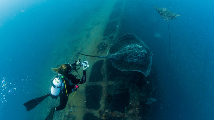 Yongala Wreck Diving - Townsville - Great Barrier Reef - Australia