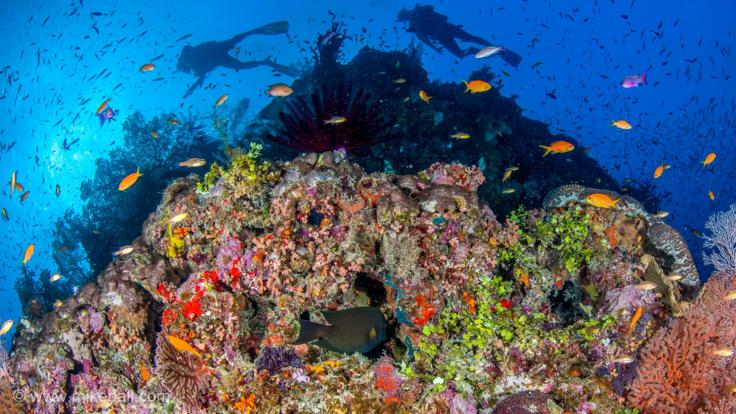 3,4 or 7 Night Great Barrier Reef Expedition