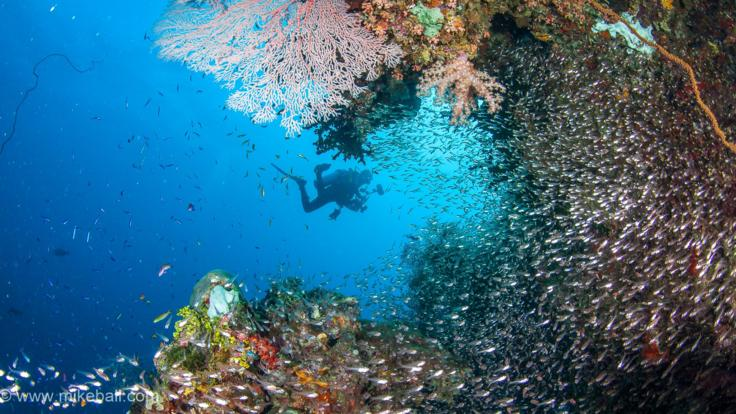 Great Barrier Reef Snorkel & Dive Liveaboard Trips