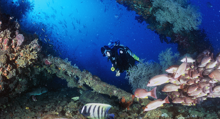 Yongala Dive Trips - 6 Nights Liveaboard - Townsville to Cairns