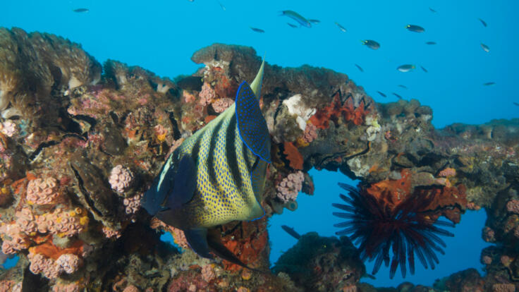 Dive the Yongala Wreck off Townsville - 6 Night Liveaboard Dive Tours