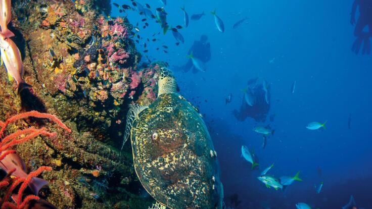 Yongala Dive Tours - Sea Turtle on Yongala Wreck