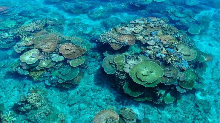 Great Barrier Reef Boat Charter - Dive & Snorkel the Reef