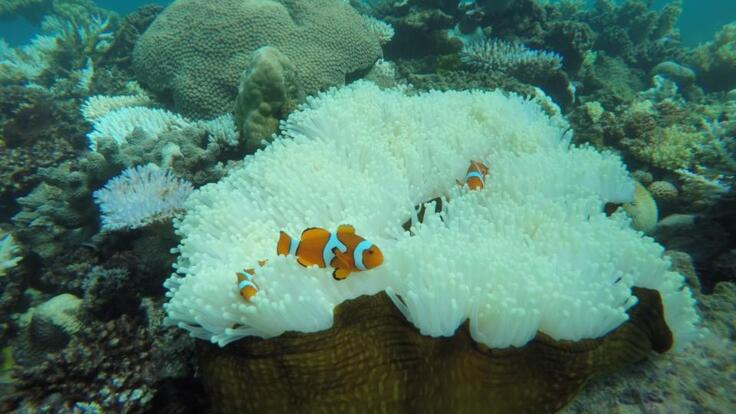 Great Barrier Reef Charter Boats - Nemo