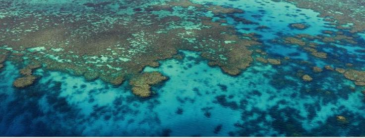 Aerial View of the Lace Like Coral Patterns on the Great Barrier Reef in Australia