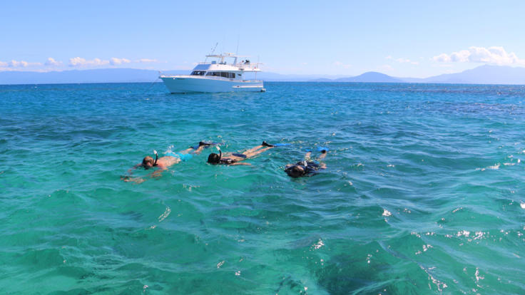 Snorkeling Coral Reefs on the Great Barrier Reef from Private Charter Boat