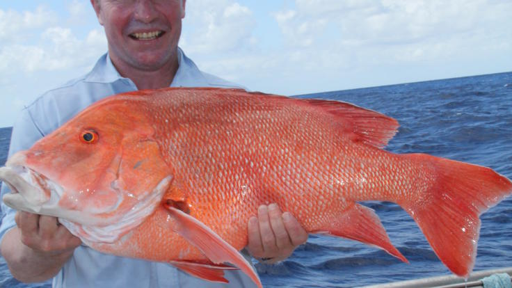 The opportunity to catch fabulous reef  fish off Townsville on private charter boat.