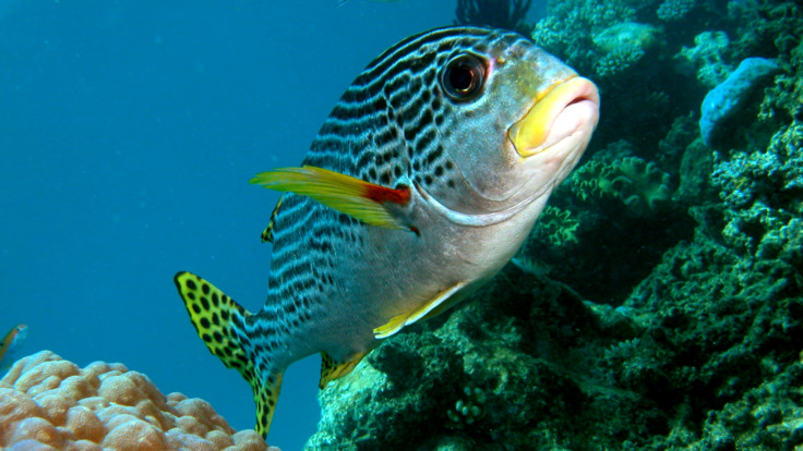 Stunning reef fish, Great Barrier Reef