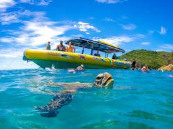 Sea turtles are often encountered on our Whitsundays snorkel tours on the Great Barrier Reef in Australia