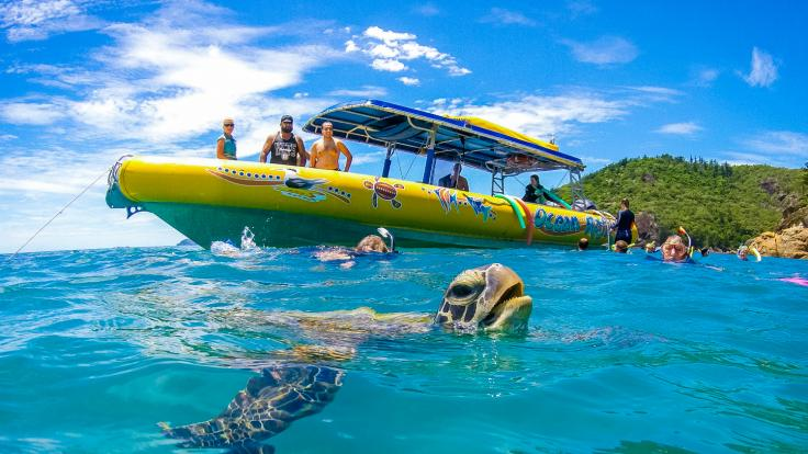 Sea turtles are often encountered on Ocean Rafting tours!
