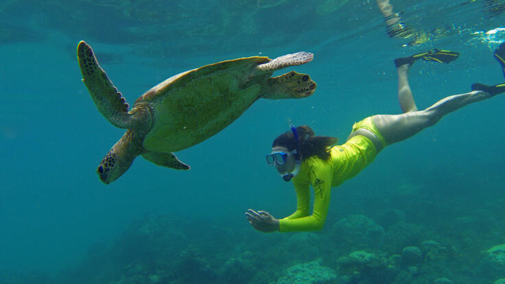 Small Group Snorkel Tour - Snorkel With Turtles