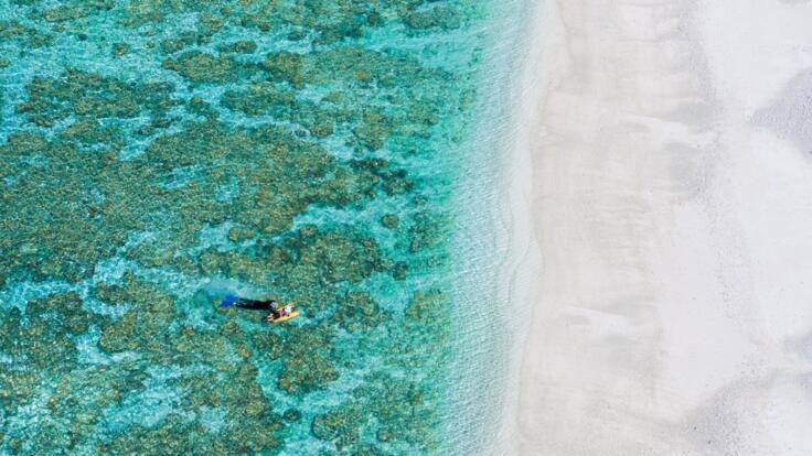 Lady Elliot Island Tours - Snorkel the lagoon
