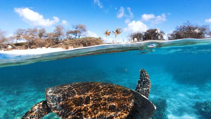 Lady Elliot Island Tours - Swim with turtles around Lady Elliot Island