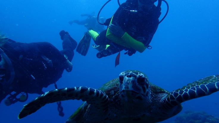 Learn to Scuba Dive Magnetic Island - Scuba Divers with Turtles