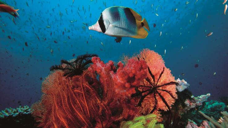 Dive and snorkel tour Port Douglas - Amazing corals