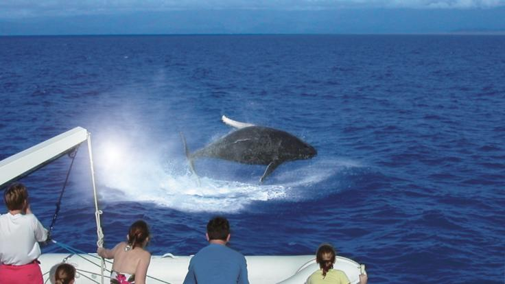 Swim with Dwarf Minke Whale - Port Douglas