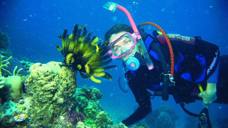 Up to 2 night dives on the Barrier Reef