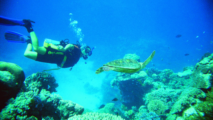 Scuba dive with turtles on the Great Barrier Reef from Cairns