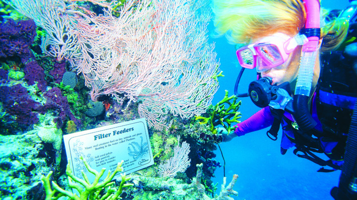 Learn about the reef whilst scuba diving on the Great Barrier Reef in Australia